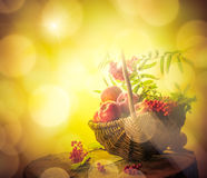 A basket full apples rowan sunset Stock Images