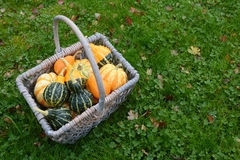 Basket full of attractive ornamental squash Stock Photo