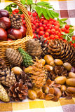 Basket full of autumn acorns, cones and chestnuts Stock Photos