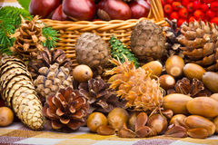 Basket full of autumn acorns, cones and chestnuts Stock Images
