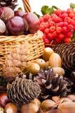Basket full of autumn acorns, cones and chestnuts Stock Photo