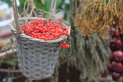 Red berries in the basket. Big wicker basket full of red currants berries Royalty Free Stock Photo
