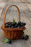 Basket full of black currant Royalty Free Stock Photo