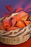 Basket full - Bladder Cherry Royalty Free Stock Images