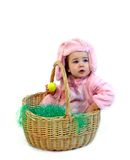 Basket full of Bunny Stock Photography