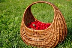 Basket full of cherries. Basket full of fresh red cherries Stock Photography