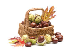 Basket full of chestnuts Royalty Free Stock Images