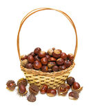 Basket full of chestnuts Stock Photos