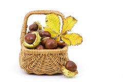 Basket full of chestnuts and autumnal leaves Stock Images