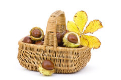 Basket full of chestnuts and autumnal leaves Royalty Free Stock Photo