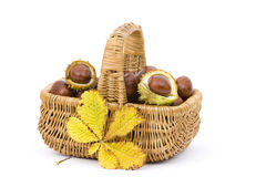 Basket full of chestnuts and autumnal leaves Stock Photos