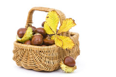 Basket full of chestnuts and autumnal leaves Stock Photo