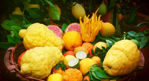 Basket full of citrus fruits Royalty Free Stock Images