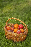 Basket full of colorful red Easter eggs on the grass Royalty Free Stock Photos