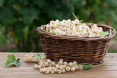 Basket full of currants Royalty Free Stock Images