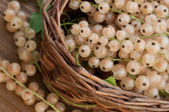 Basket full of currants Stock Image