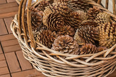 Basket full of dried pine cones to decorate home Stock Images