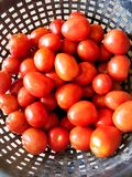 Basket Full Of Edible Tomatoes stock images