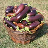 A basket full of egg-plants Royalty Free Stock Photography