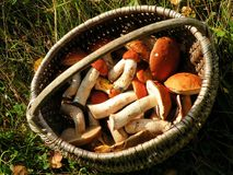 Basket full fitting for food mushrooms, Lithuania Royalty Free Stock Photos