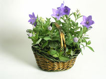 Basket full of flowers Stock Photos