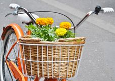 Basket full of flowers on a bicycle. Royalty Free Stock Images