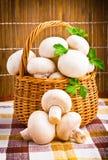 Basket full of fresh champignon mushrooms Royalty Free Stock Image