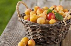 Basket full of fresh mirabelle plums Stock Photo