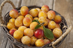 Basket full of fresh mirabelle plums royalty free stock photo