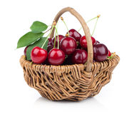 Basket full of fresh red cherry royalty free stock image