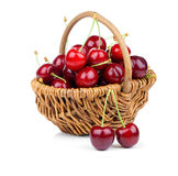 Basket full of fresh red cherry Royalty Free Stock Photos