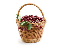 Basket full of fresh red cherry on a white background Royalty Free Stock Images