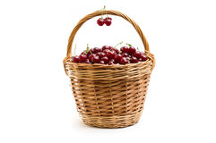 Basket full of fresh red cherry on a white background Royalty Free Stock Image