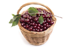 Basket full of fresh red cherry on a white background Royalty Free Stock Photography