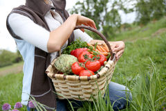 Basket full of fresh vegetables Stock Images