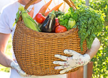 Basket is full of fresh vegetables Stock Photos