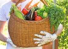 Basket is full of fresh vegetables Stock Photos