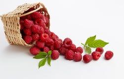Basket Full of Freshly Picked Raspberries Royalty Free Stock Photos