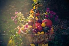 Basket Full Fruit Autumn Garden Mystical Light Stock Photography