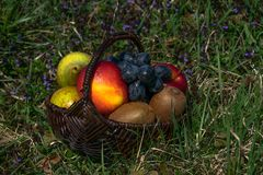 Basket full of fruit on a meadow in spring royalty free stock images