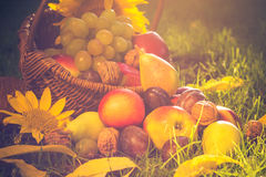 Basket full fruits grass sunset light Royalty Free Stock Image