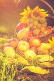 Basket full fruits grass sunset light Stock Image