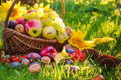 Basket full fruits grass sunset light Royalty Free Stock Photos