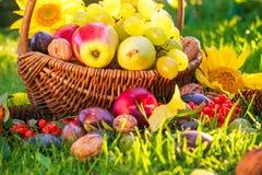 Basket full fruits grass sunset light Stock Photo