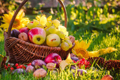 Basket full fruits grass sunset light Stock Photos
