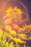 Basket full fruits grass sunset light Royalty Free Stock Photos