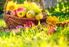 Basket Full Fruits Grass Sunset Light Stock Images