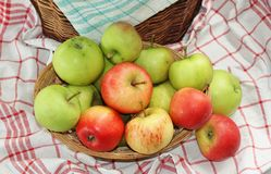Basket full of garden apples. Still life of a variety of tasty green and red garden apples, arranged in a wooden basket Stock Photo