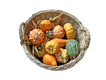 Basket full with Gourds Stock Images