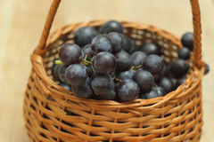 Basket full of grapes Stock Images